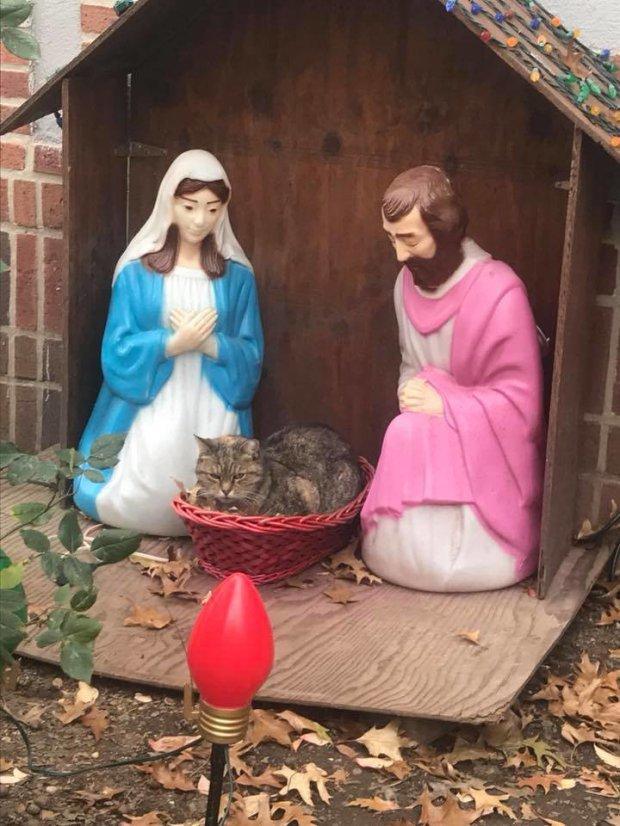 chat creche jesus