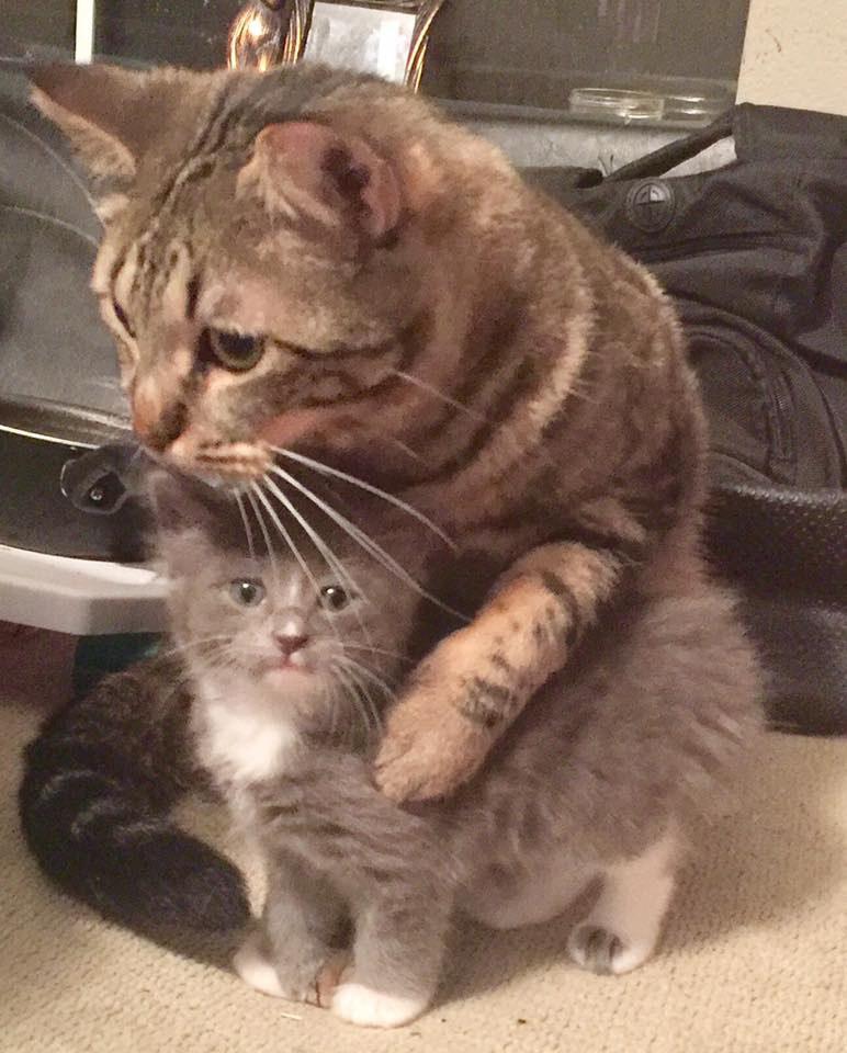 chaton calin chat