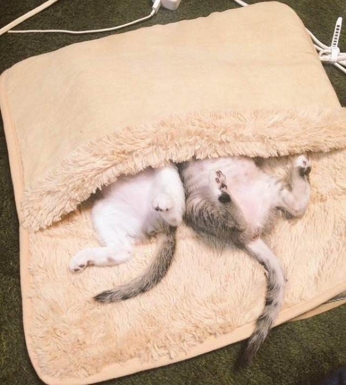 chatons câlins bouillotte