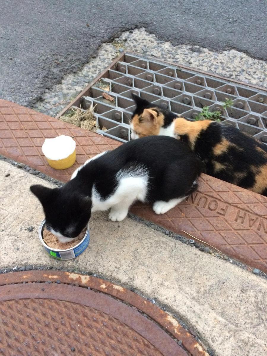 chatte et son chaton sauvés