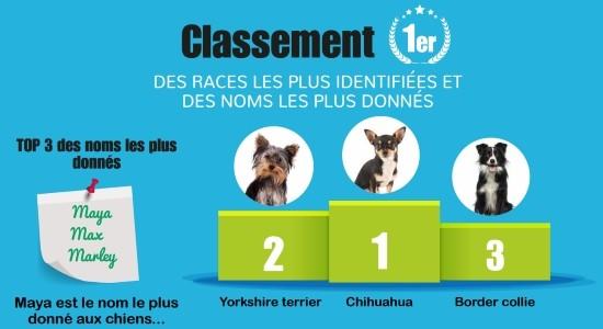 Quels sont les noms et races de chiens et chats les plus courants en France ?