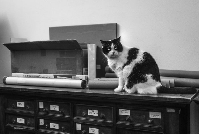 chats au travail
