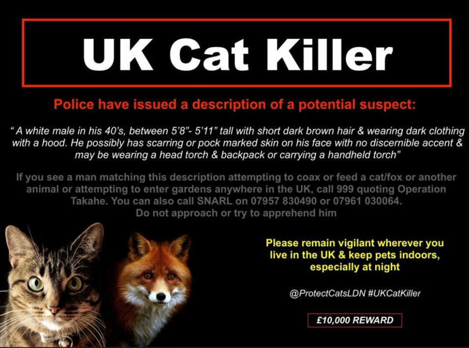 Mais qui est ce mystérieux tueur en série de chats — Londres