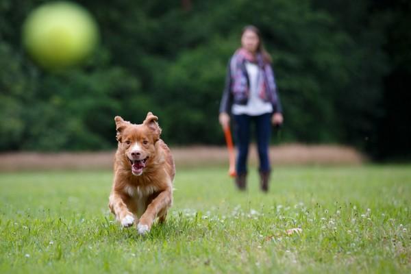 Empruntez un nouvel itinéraire avec votre chien