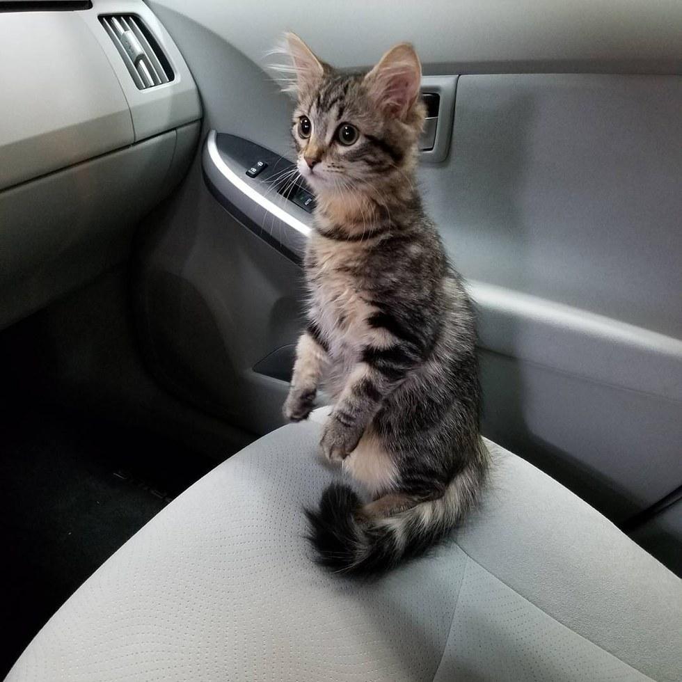chaton voiture