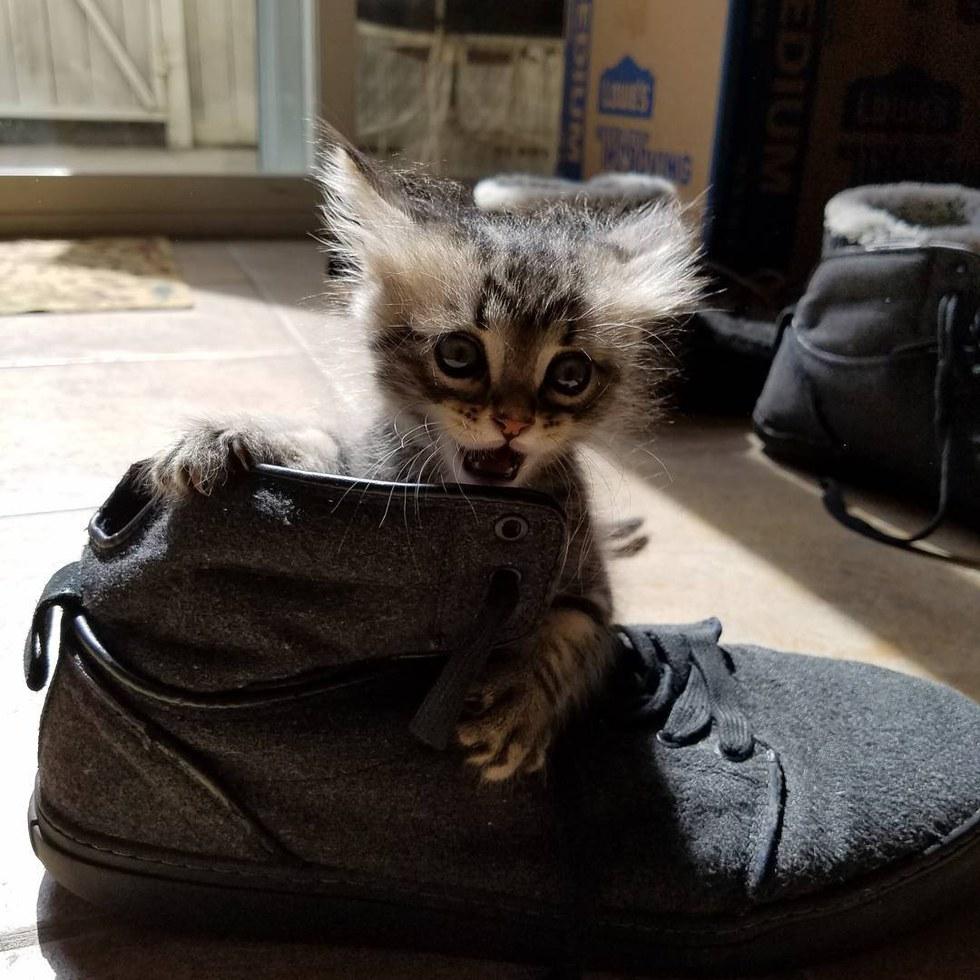 chaton minuscule