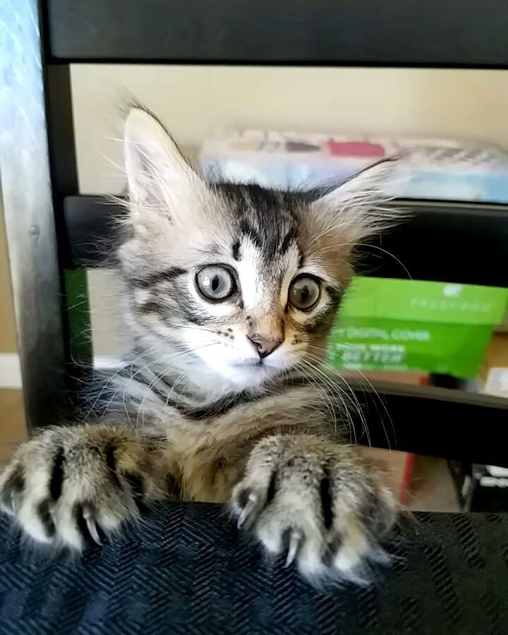 jack petit chaton mignon