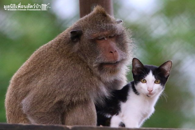 macaque et chat