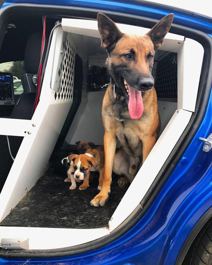 chiots abandonnés avec Tek le chien de police