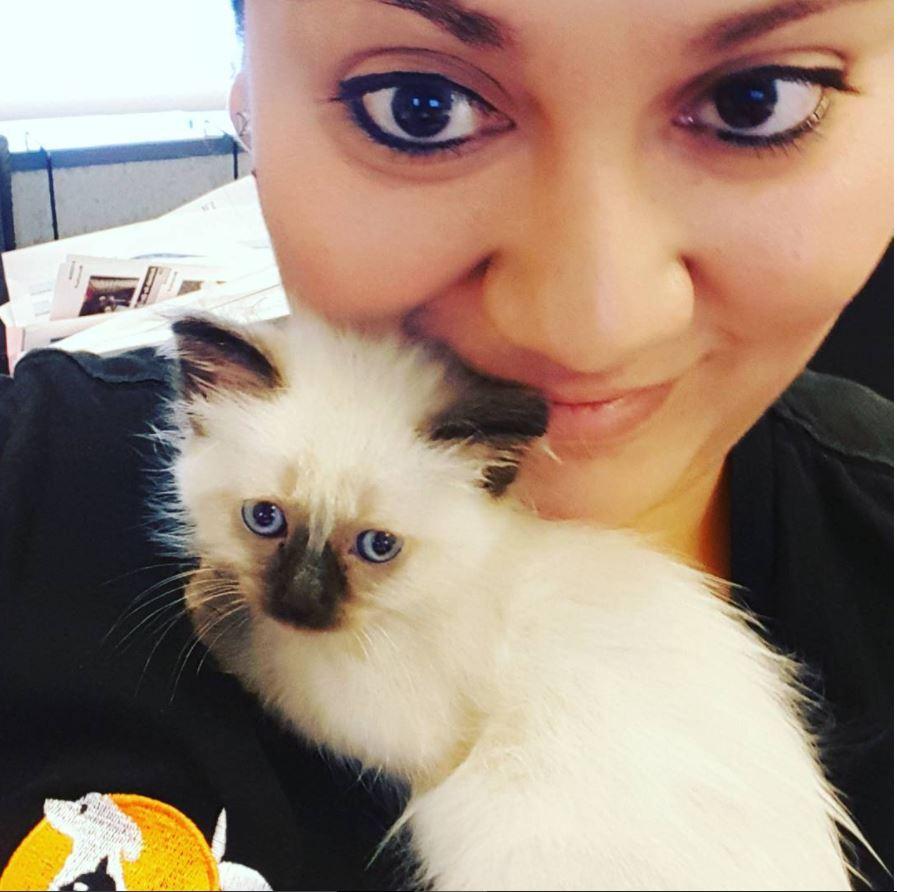 saison chatons instagram