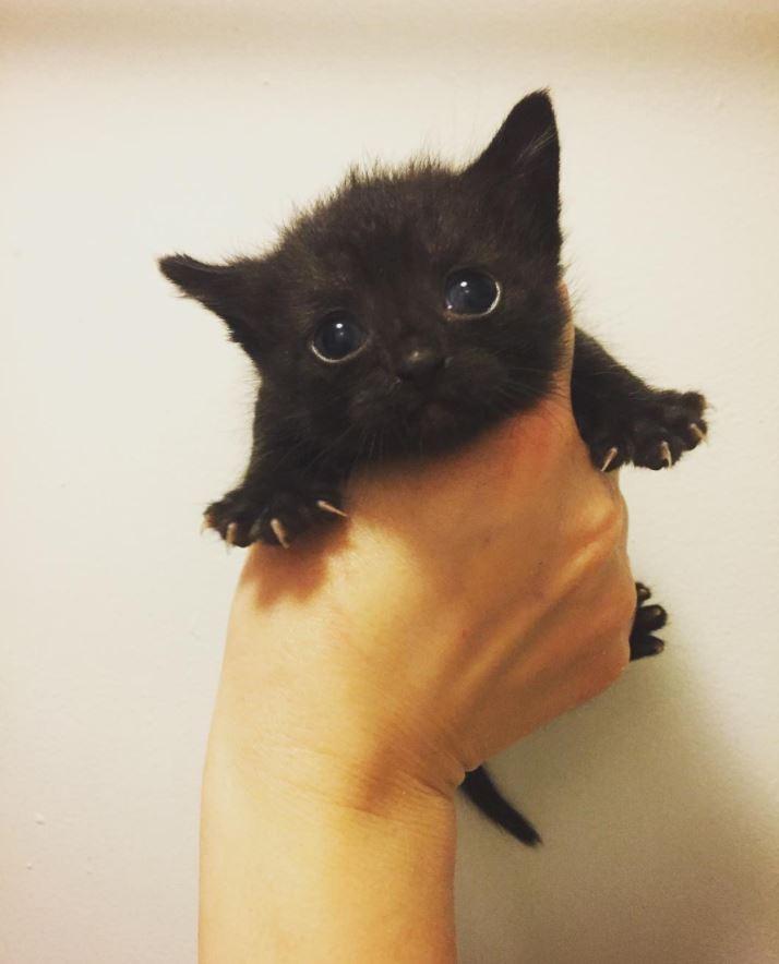 saison chaton instagram