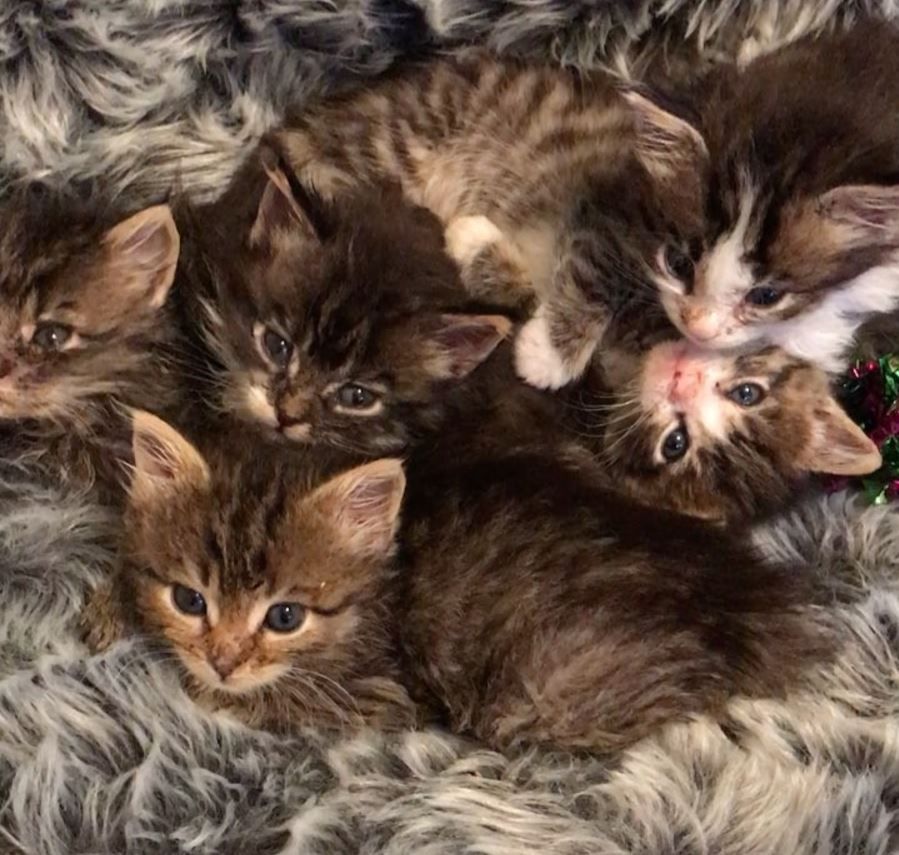 chatons famille d'accueil