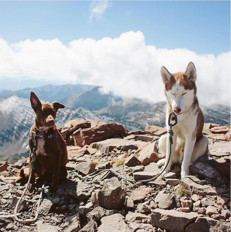 kodiak kuma chiens voyage