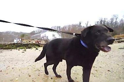 chien enchaîné plage