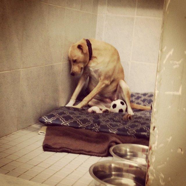 lana chien triste