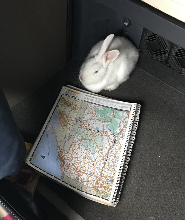 lapin camion