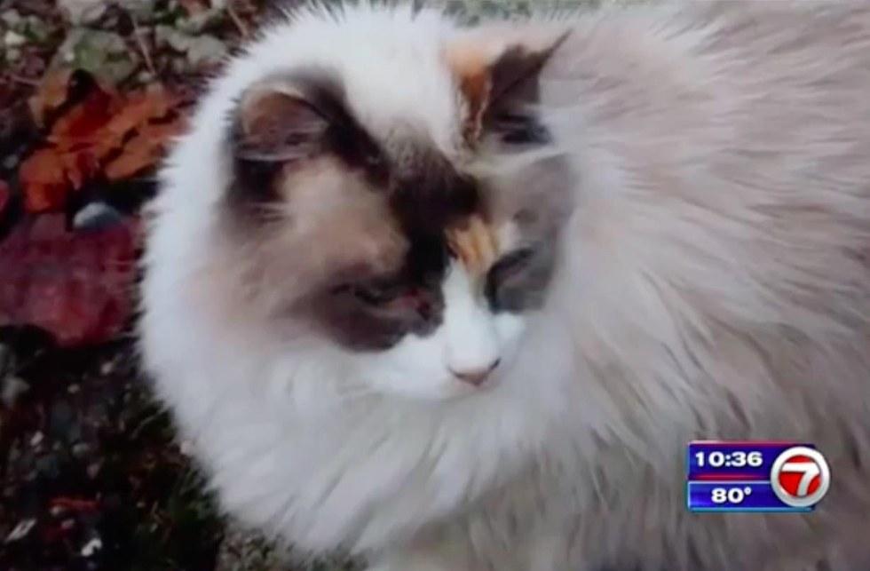 lily chat disparu retrouvé