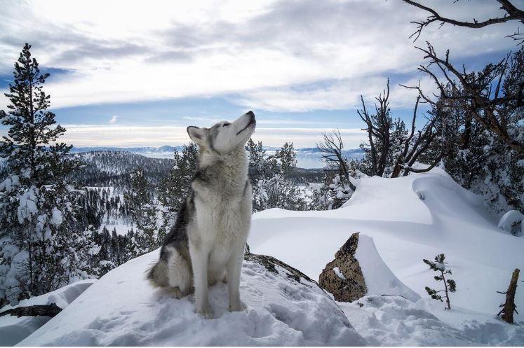 loki chien voyage
