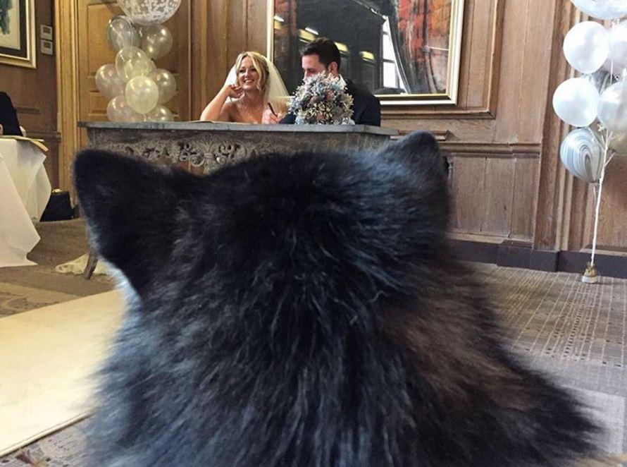 malamute mariage