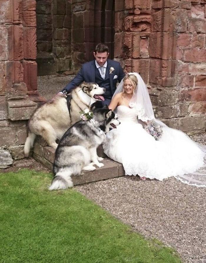 mariage malamutes