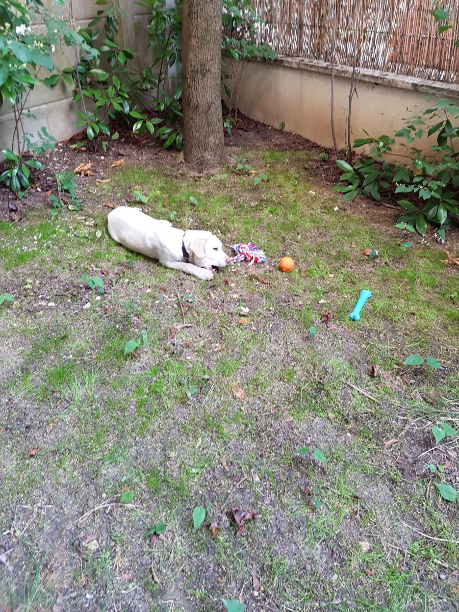 malinka chien jardin