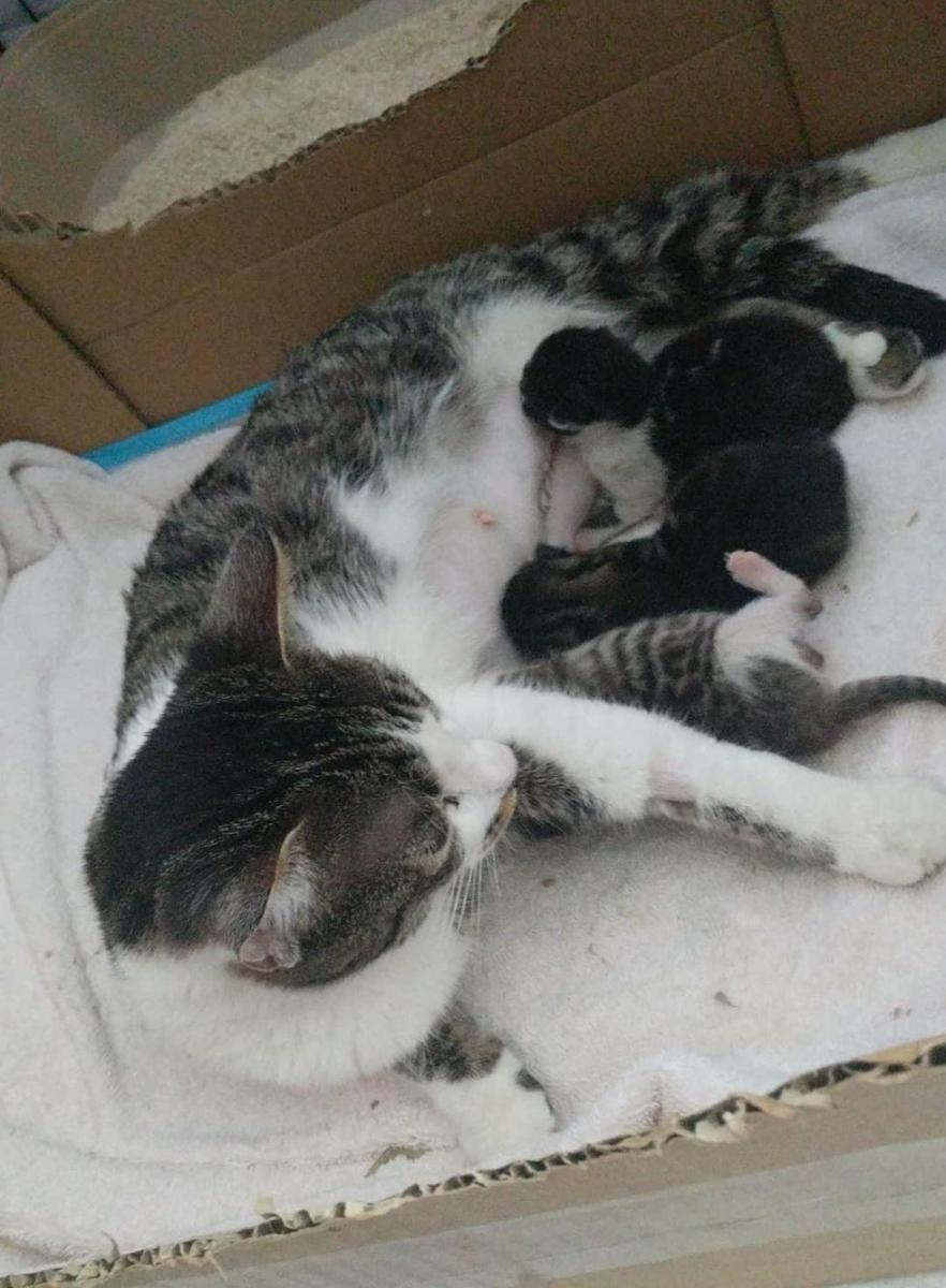 maman et chatons