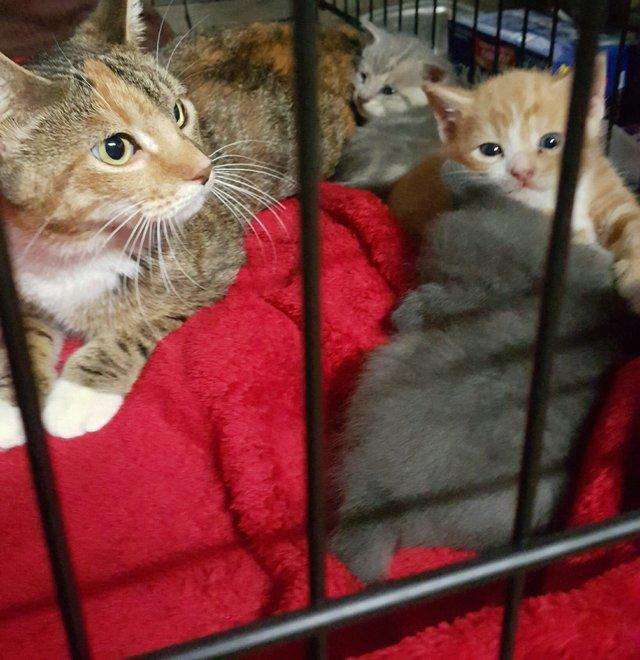chaton et maman