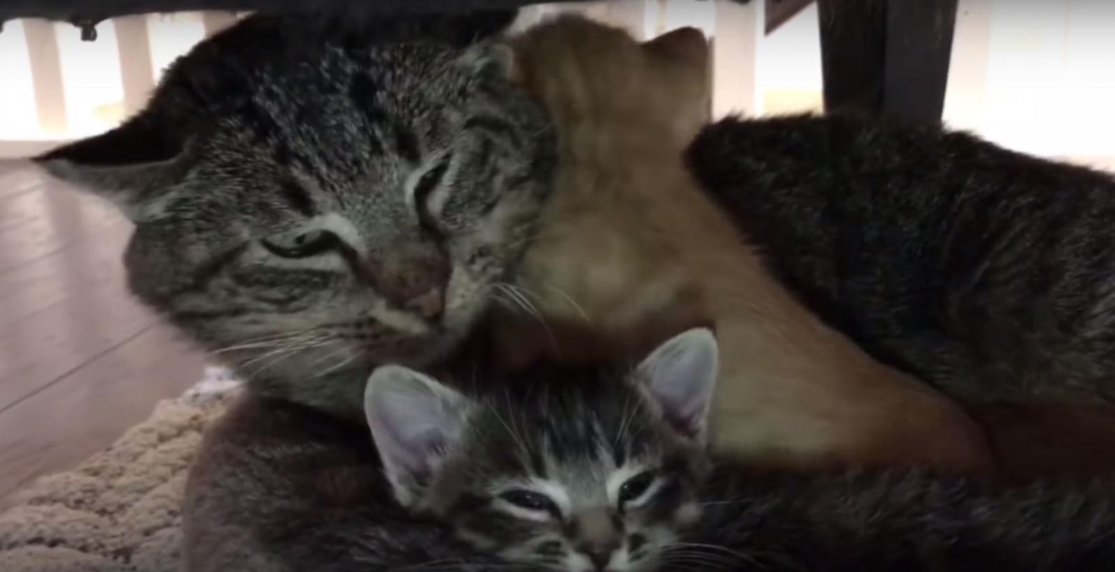 mason vieux chat père adoptif
