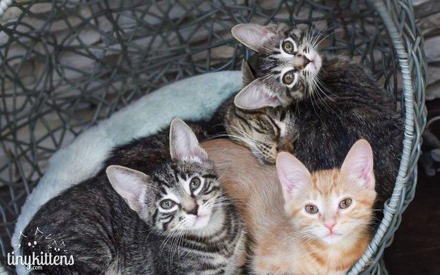 chatons adoptés par un chat