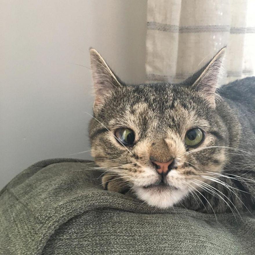 maya chat handicapé yeux