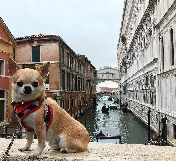 miami chien voyage