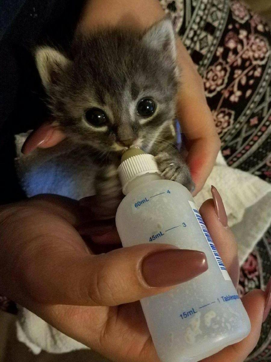 chaton biberon