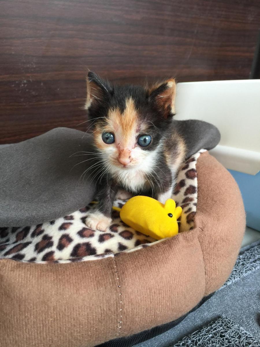 chaton jouets