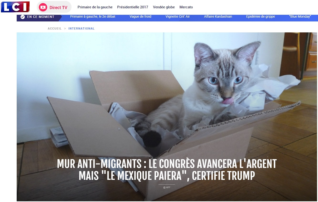 Donald Trum mur mexique make america kittens again