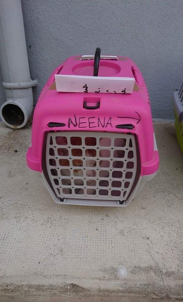 chat caisse transport nîmes abandon