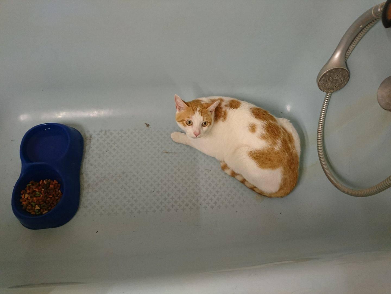 chat roux baignoire