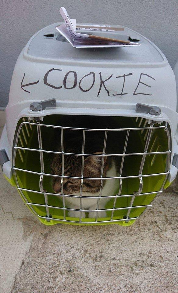 chat caisse transport abandon nîmes