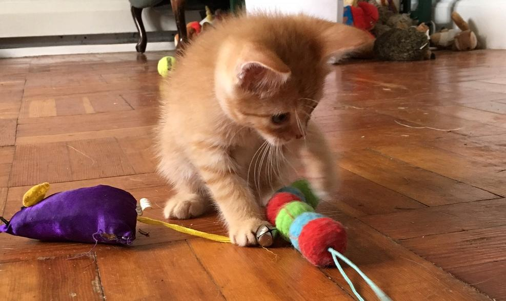 chaton joue