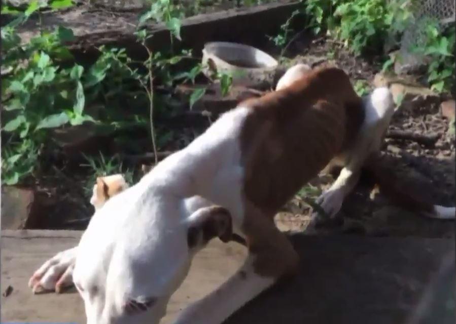 chien malnourri