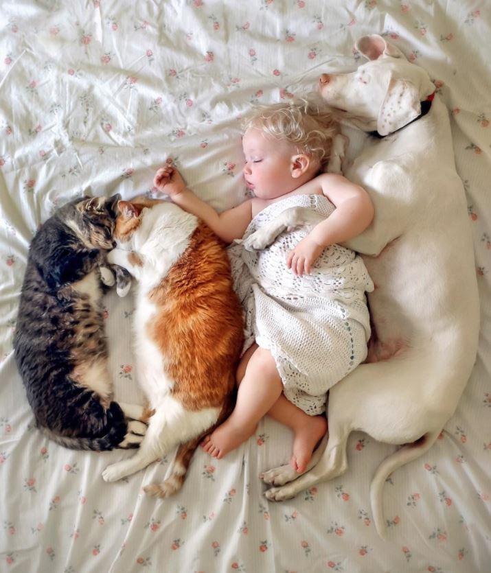 pointer anglais chats bébé sieste