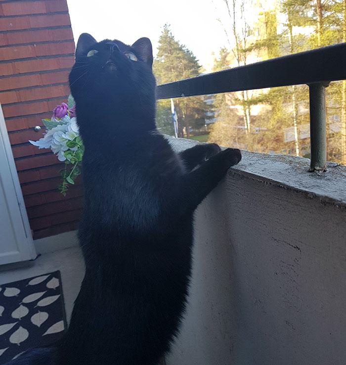 nuka chat balcon