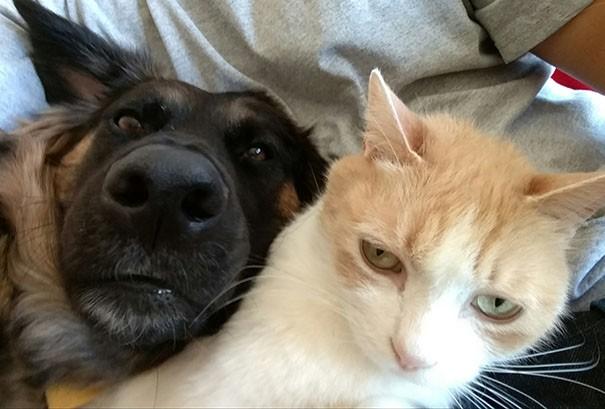 chien et chat selfie