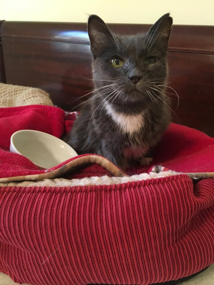 ora chatte senior abandonnée