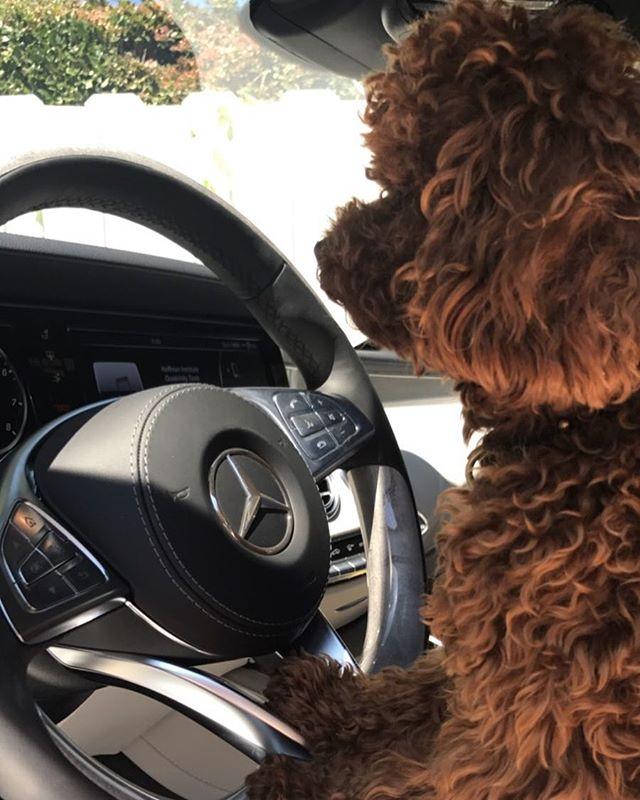 orlando bloom chien voiture