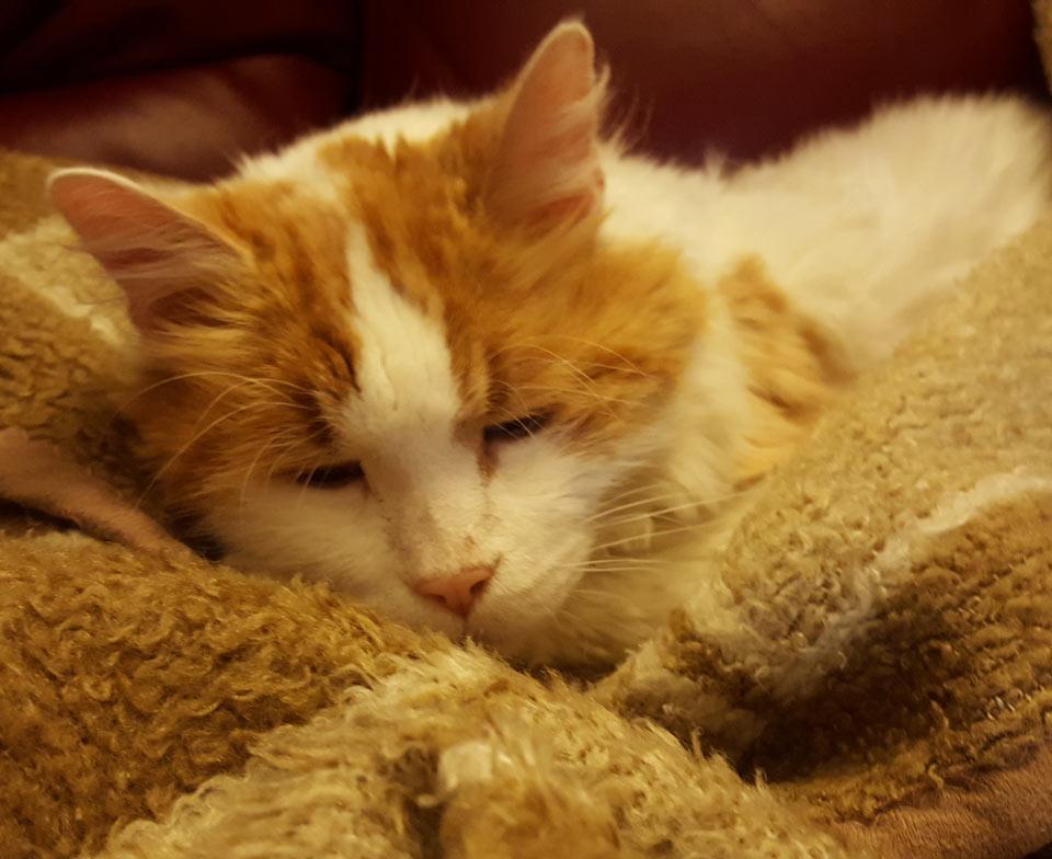 ozzie le chat de 15 ans