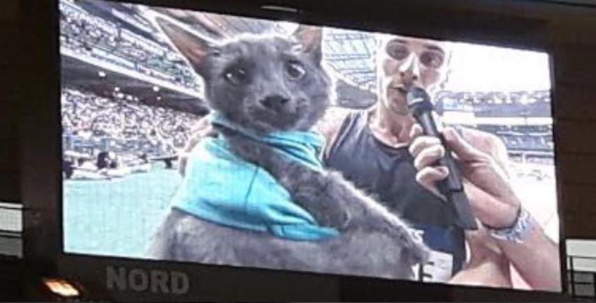 pierre-ambroise bosse et son chat