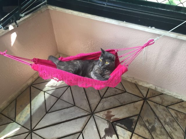 chat hamac sieste