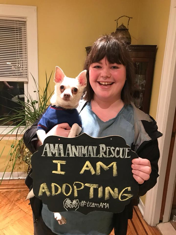 pablo chihuahua blanc adoption refuge