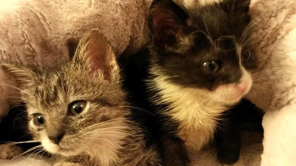 chatons prématurés sauvés