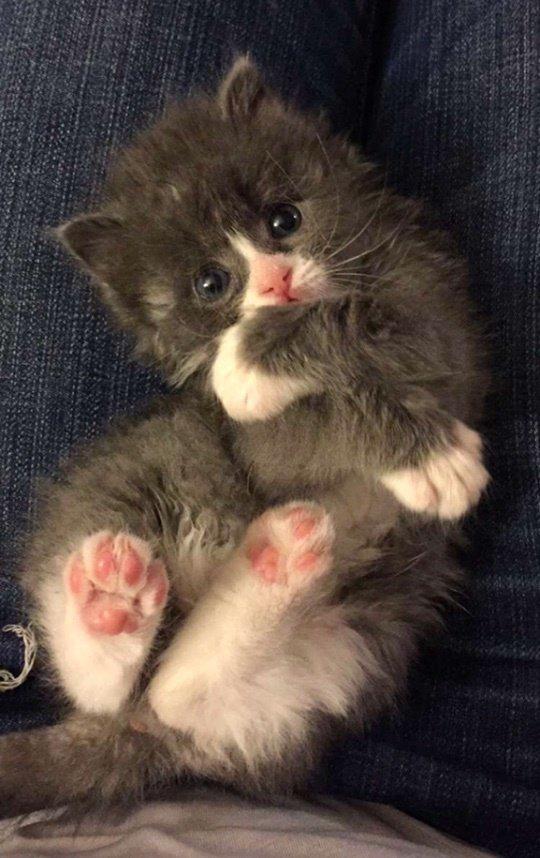 chaton mignon couché